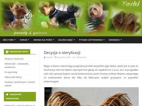 Yorkizklasa.pl