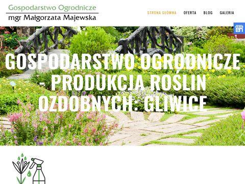 Roslinyozdobne-zamkowa.pl bratki Gliwice