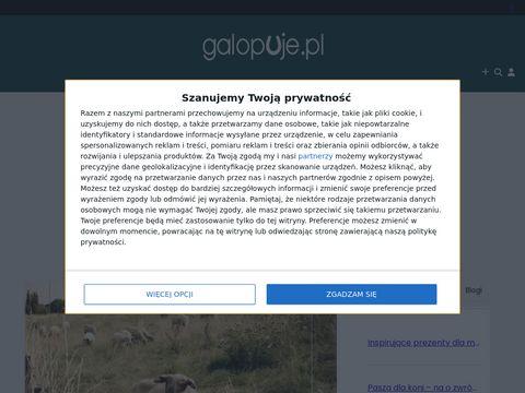 Galopuje.pl portal jeździecki