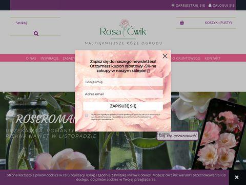 Rosacwik-sklep.pl róże pnące