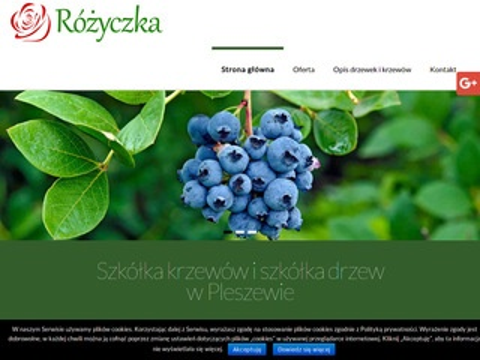 Szkolka-rozyczka.pl gospodarstwo
