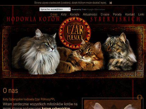 Hodowla kotów Czar Północy*pl